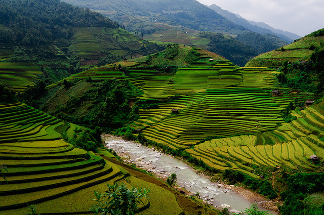326619,xcitefun-rice-fields-vietnam-4